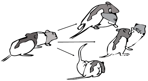 Figure of rats interacting