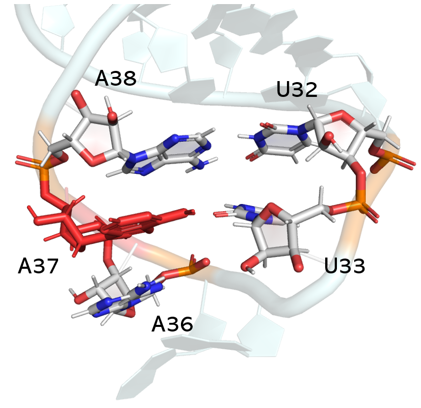 Image: An up-close look at the Anticodon stem-loop ASL (blue) region from the full-length tRNA figure above. This image shows the nucleobase stacking interactions that can confer greater stability to the ASL region when A37 or other positions are modified.